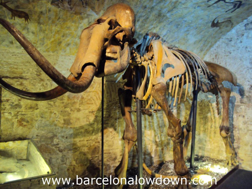 A mammoth skeleton in the Barcelona Mammoth Museum