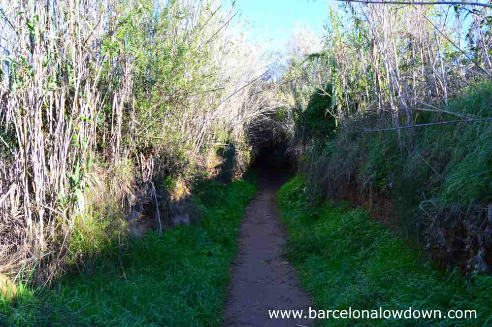 Footpath between reed beds of the river francoli from the roman aqueduct to Tarragona