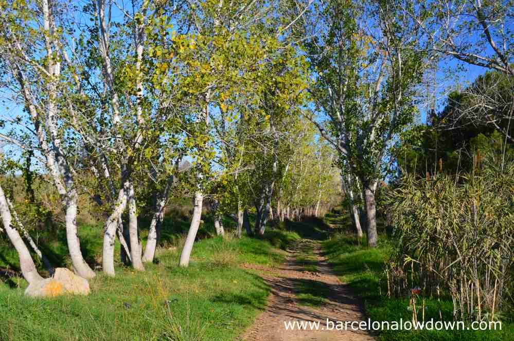 Walking tree lined footpaths near Tarragona Spain